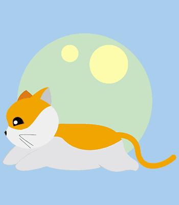 kočka07 b