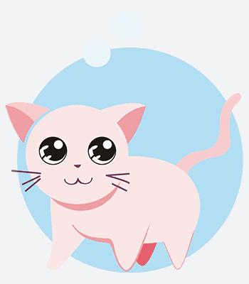 kočka06 b
