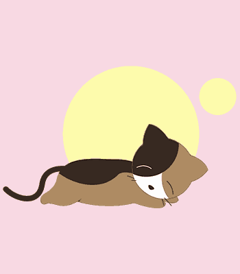 kočka05 b